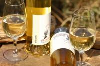 Muscaris 2018 süß Dessertwein Weißwein