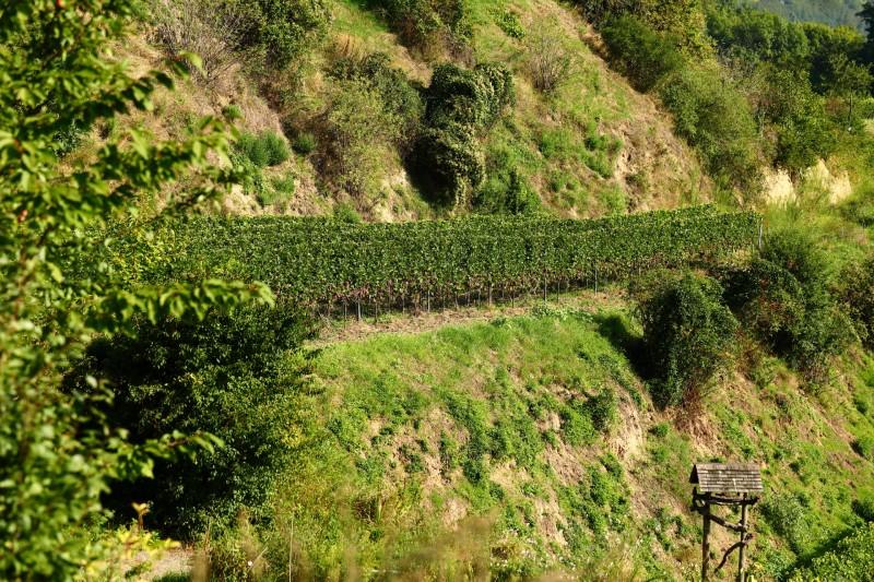 media/image/Souvignier-Gris-2019-Landschaft_1920x1280.jpg