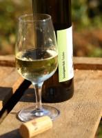 Souvignier Gris 2020 trocken Ökowein Weißwein